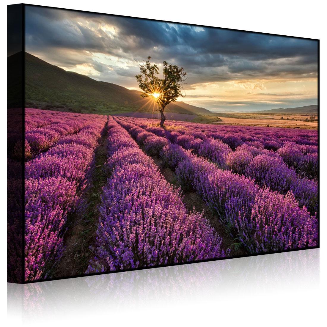 leuchtbild led bild traumhafte lavendel provence mi front lighted ebay. Black Bedroom Furniture Sets. Home Design Ideas